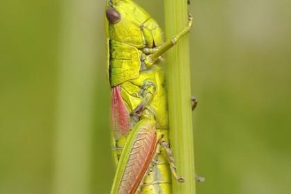 żywność pochodzenia zwierzęcego - owady